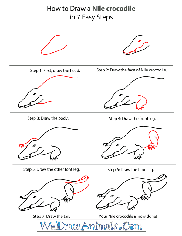 How To Draw A Nile crocodile - Step-By-Step Tutorial