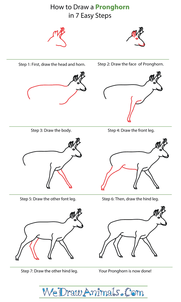 How To Draw A Pronghorn - Step-By-Step Tutorial