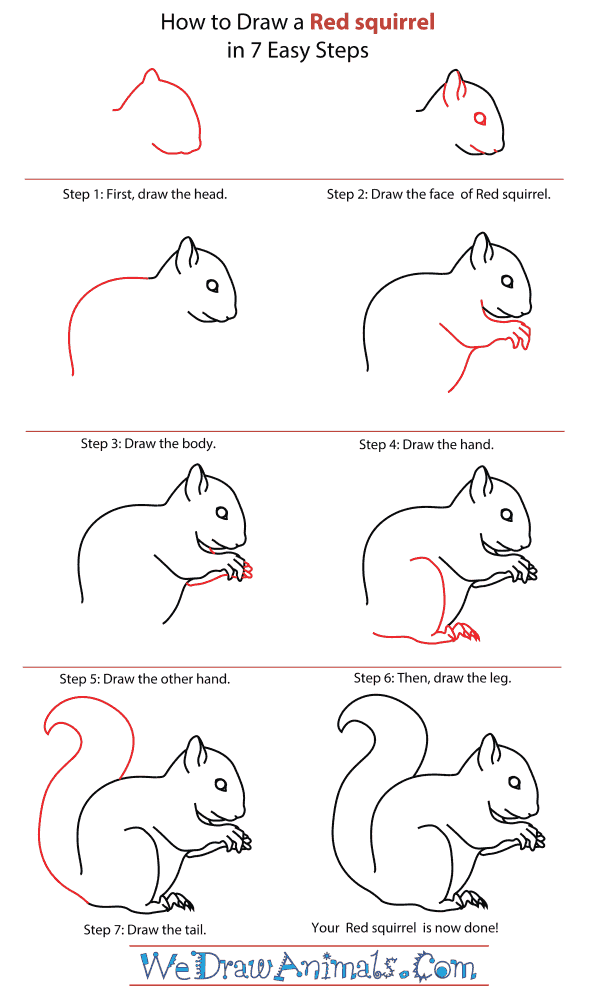 How To Draw A Red squirrel - Step-By-Step Tutorial