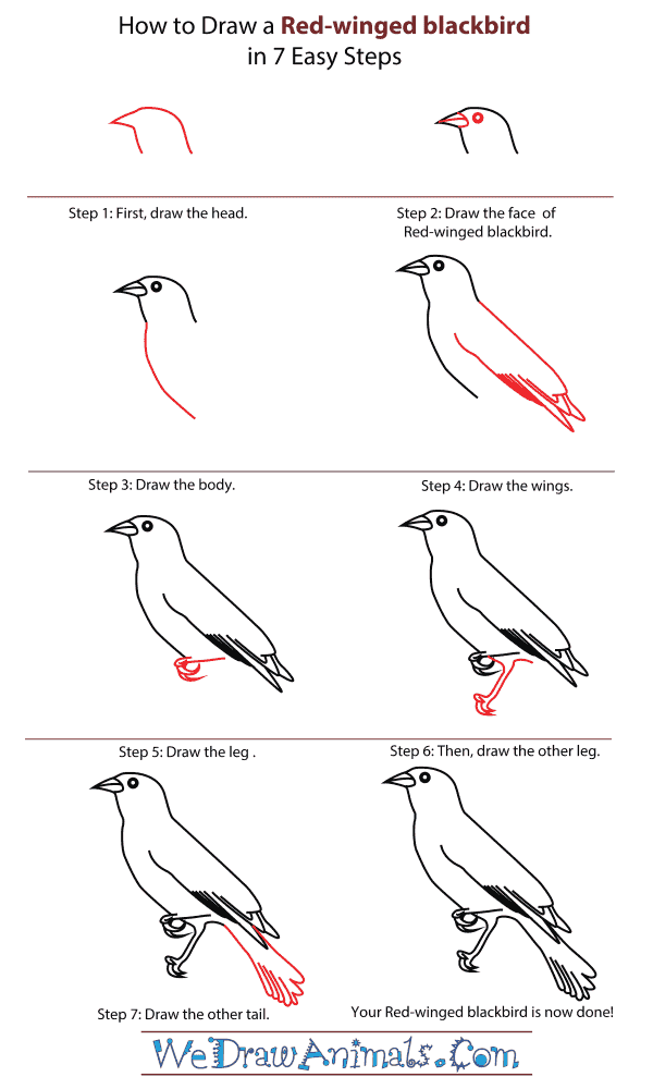 How To Draw A Red-winged blackbird - Step-By-Step Tutorial