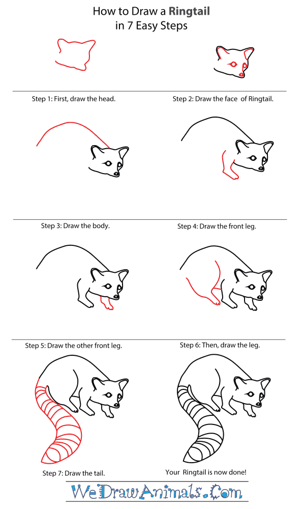 How To Draw A Ringtail - Step-By-Step Tutorial