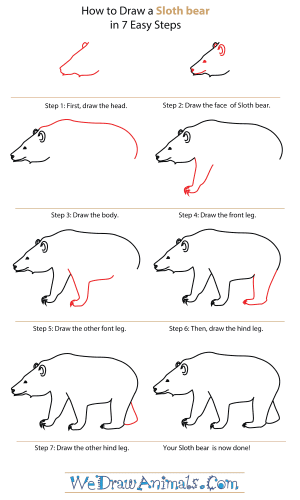 How To Draw A Sloth bear - Step-By-Step Tutorial