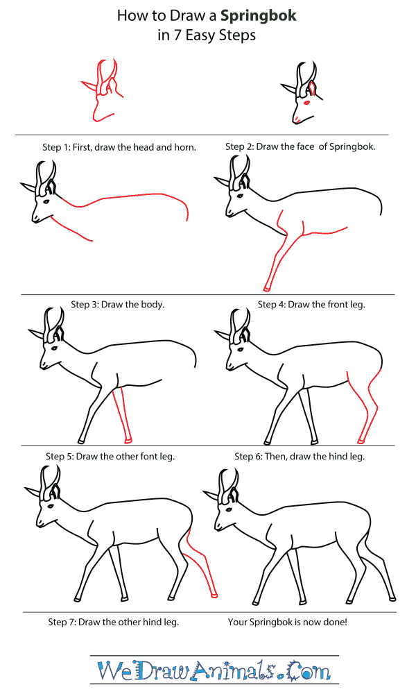 How To Draw A Springbok - Step-By-Step Tutorial