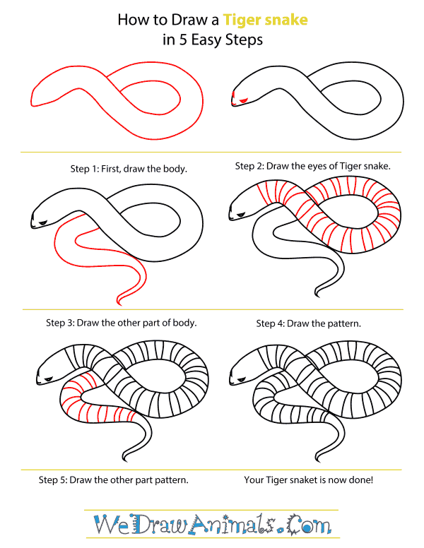 How To Draw A Tiger snake - Step-By-Step Tutorial