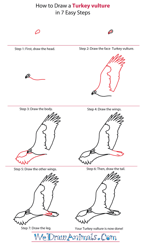 How To Draw A Turkey vulture - Step-By-Step Tutorial