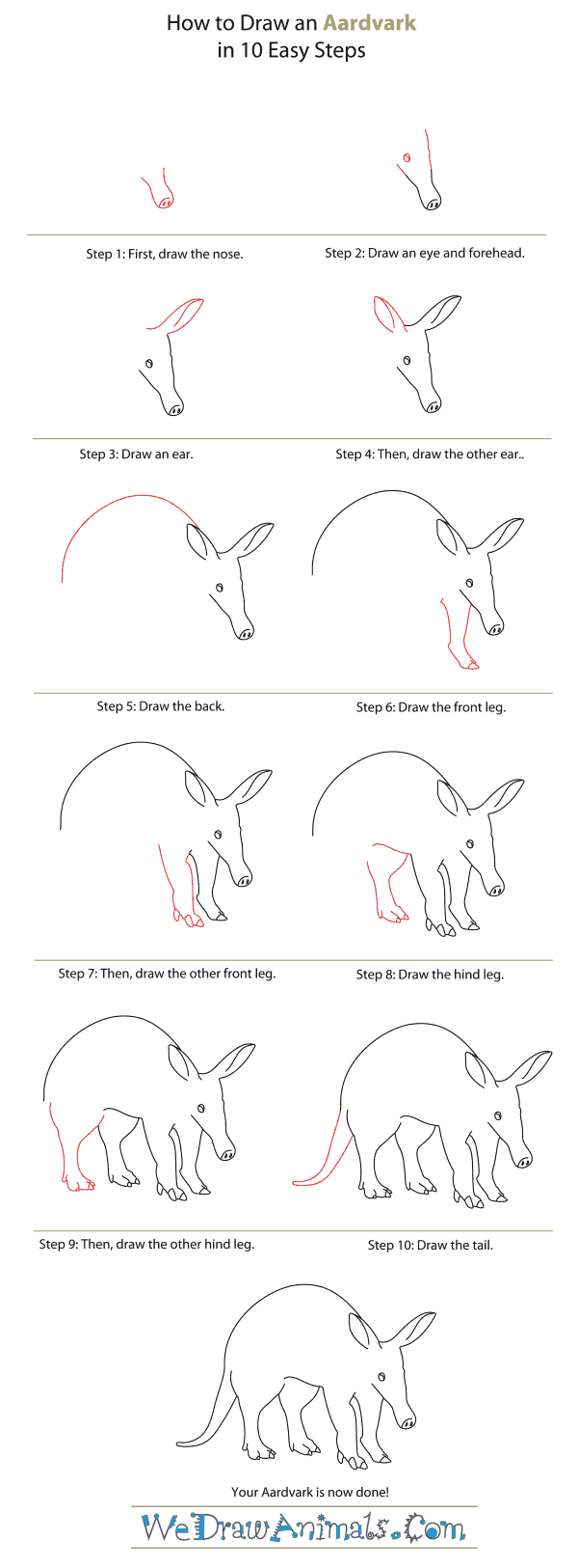 How To Draw An Aardvark  Stepbystep Tutorial