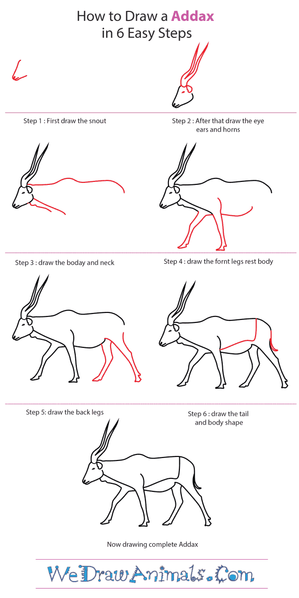 How to Draw an Addax - Step-by-Step Tutorial