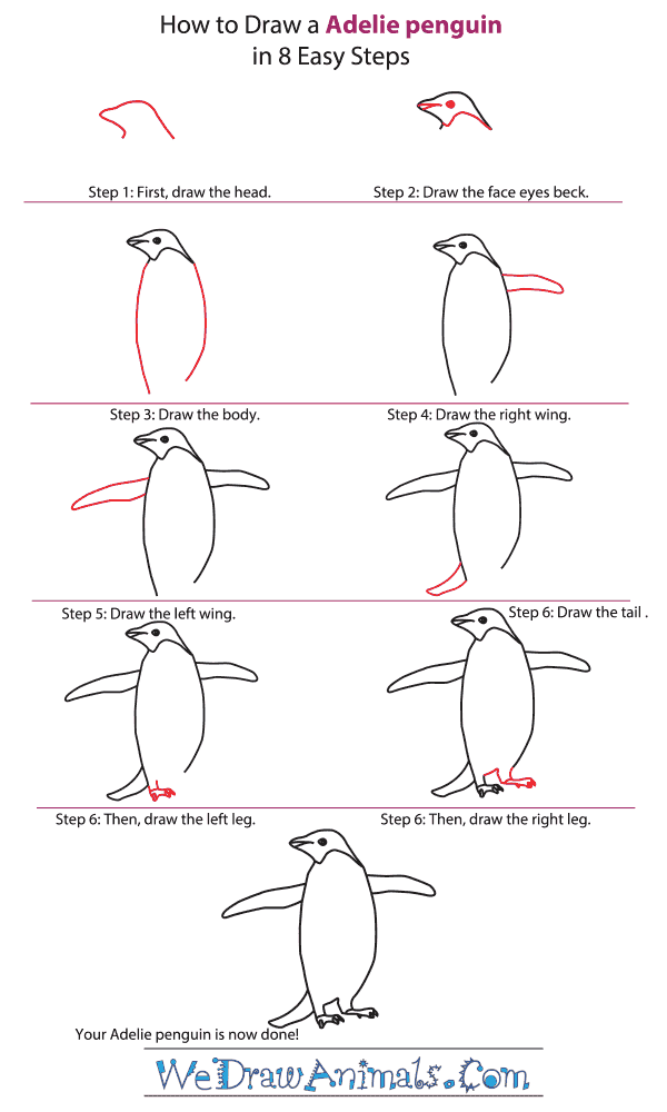 How to Draw an Adelie Penguin - Step-by-Step Tutorial