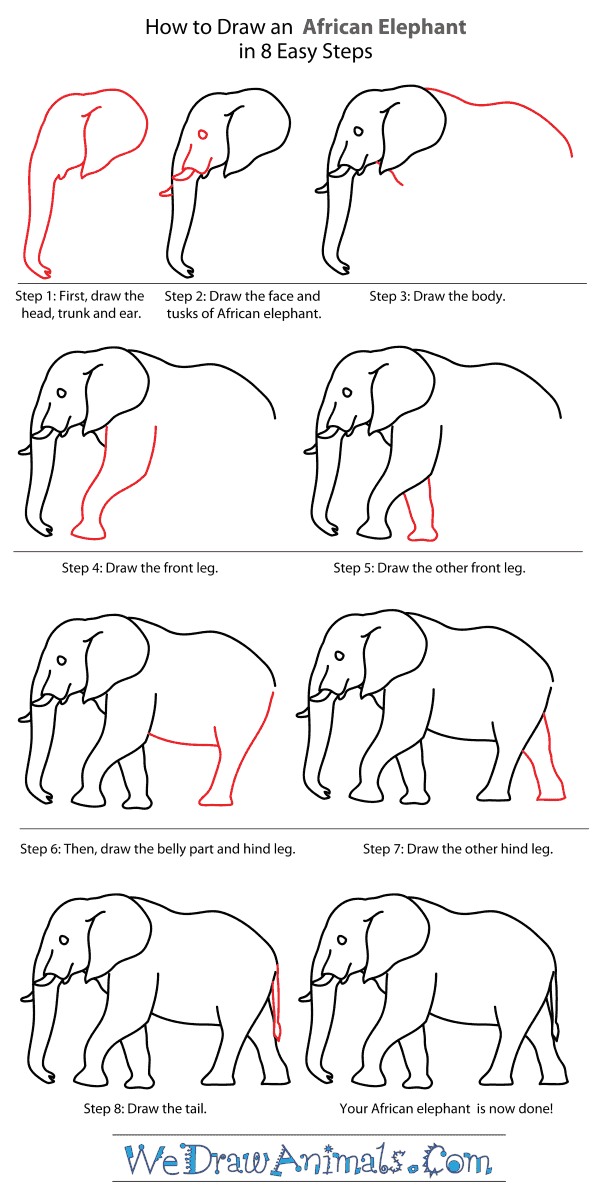 How to draw an african elephant step by step tutorial