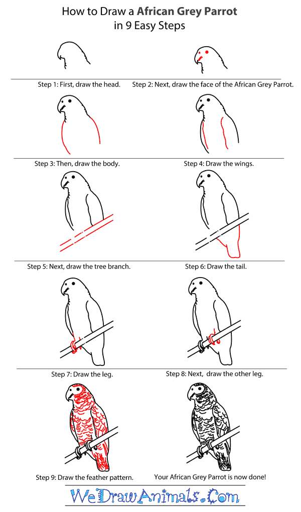 How to Draw an African Grey Parrot - Step-By-Step Tutorial