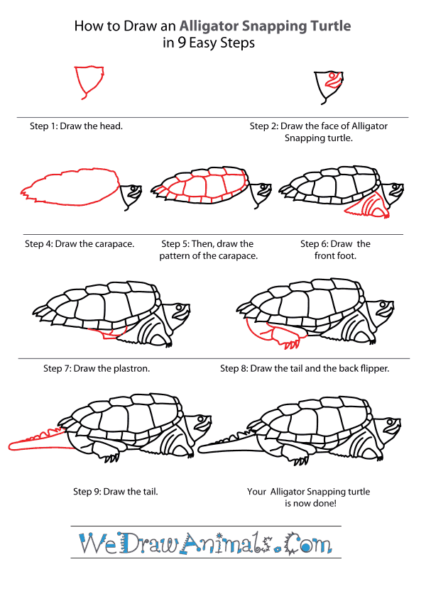 How to Draw an Alligator Snapping Turtle - Step-By-Step Tutorial