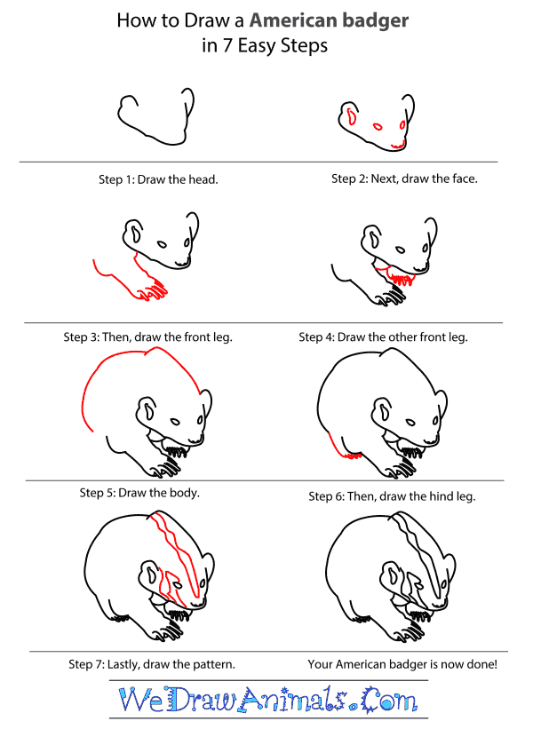 How to Draw an American Badger - Step-by-Step Tutorial