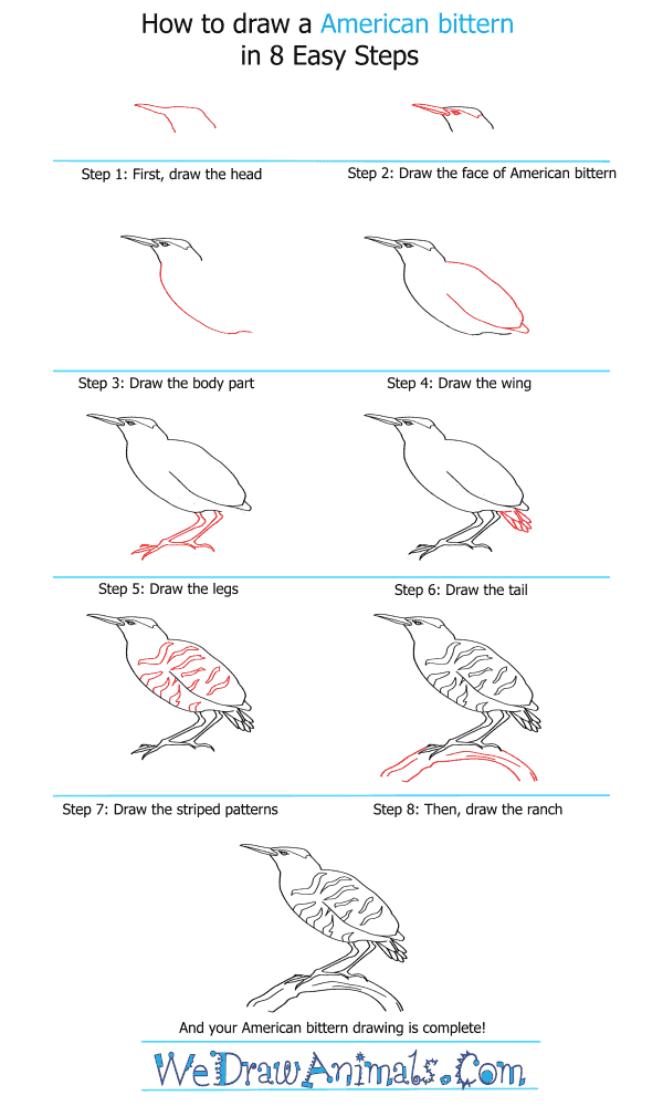 How to Draw an American Bittern - Step-by-Step Tutorial