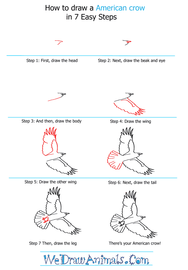 How to Draw an American Crow - Step-by-Step Tutorial