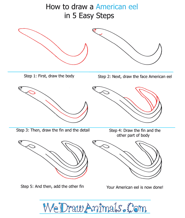 How to Draw an American Eel - Step-by-Step Tutorial