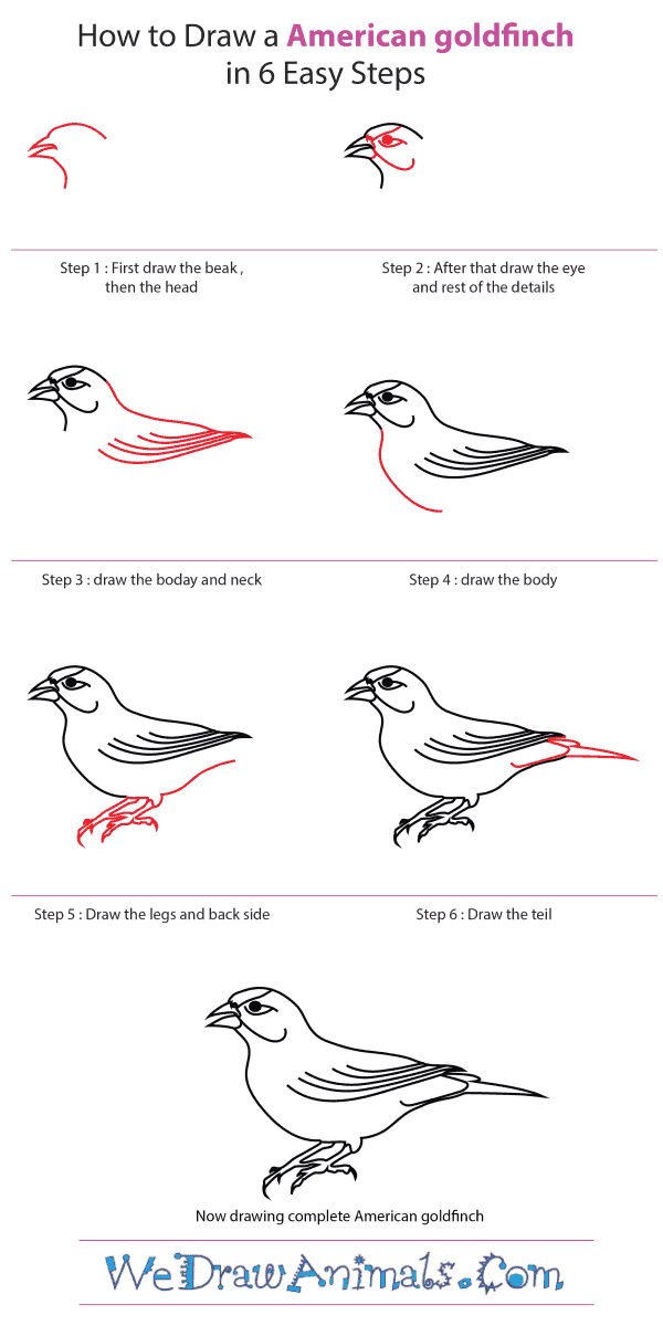 How to Draw an American Goldfinch - Step-by-Step Tutorial