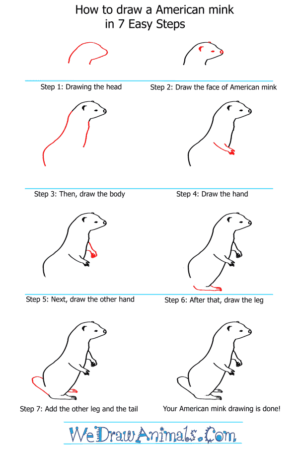 How to Draw an American Mink - Step-by-Step Tutorial