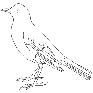 How To Draw an American Robin - Step-By-Step Tutorial