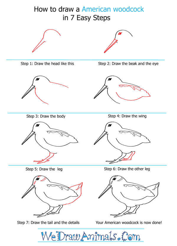 How to Draw an American Woodcock - Step-by-Step Tutorial