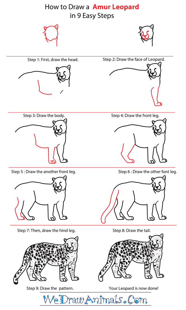 How to Draw an Amur Leopard - Step-By-Step Tutorial