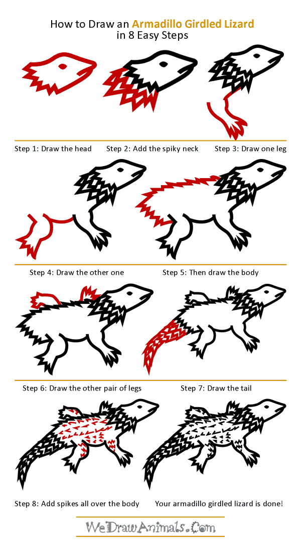 How to Draw an Armadillo Girdled Lizard - Step-by-Step Tutorial