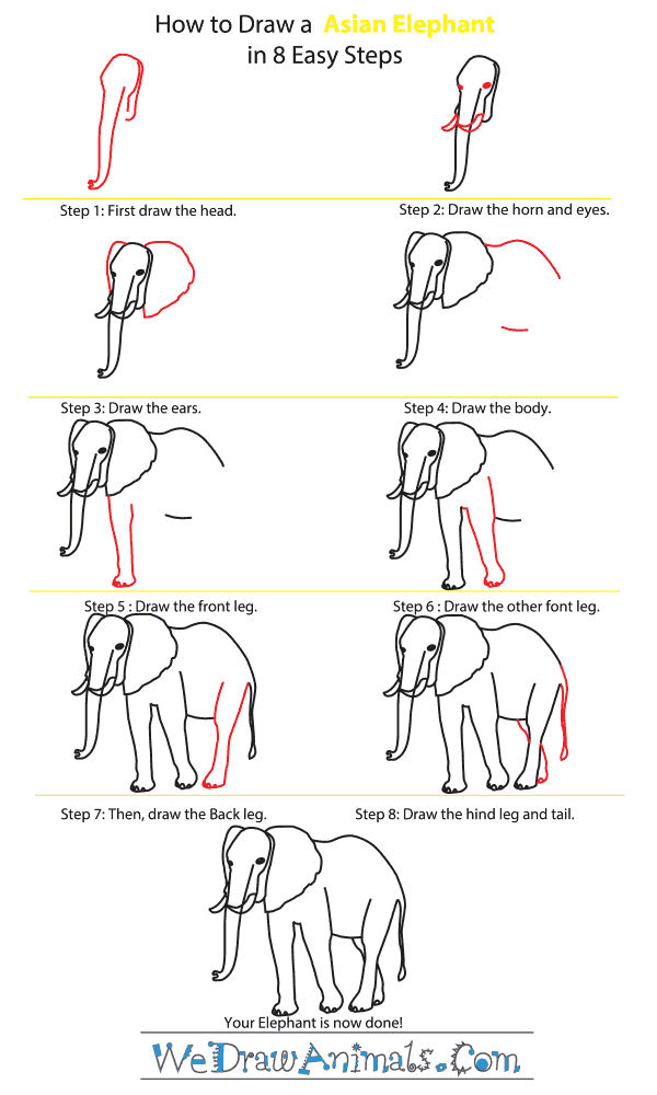 How to Draw an Asian Elephant - Step-By-Step Tutorial