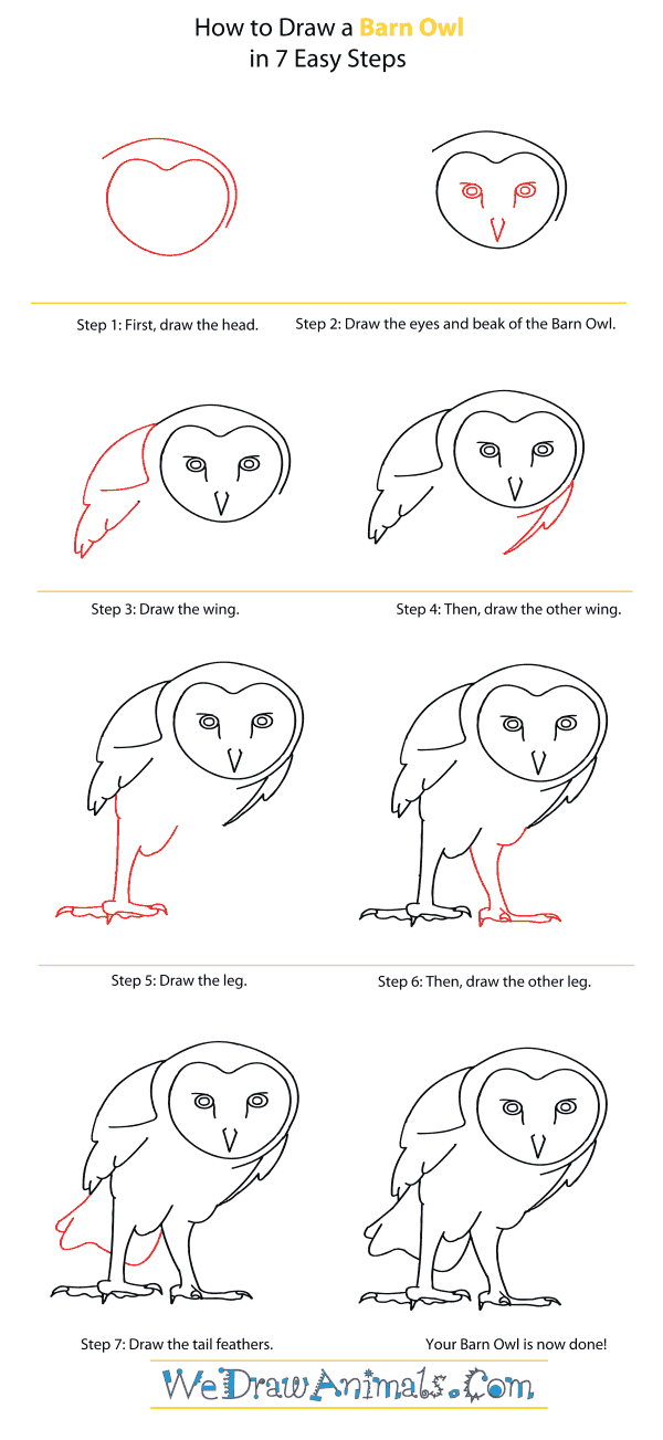 How to Draw a Barn Owl - Step-By-Step Tutorial