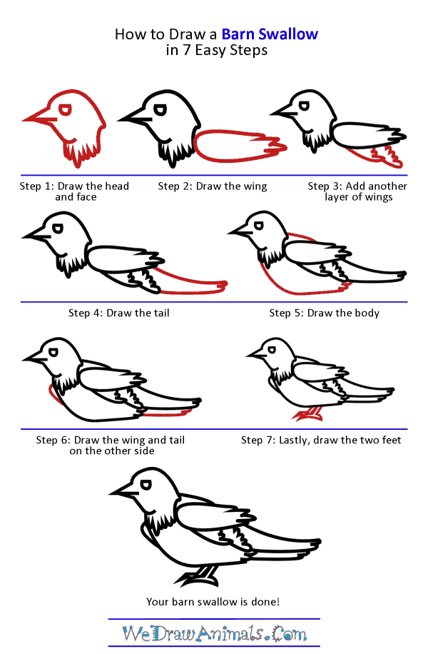 How to Draw a Barn Swallow - Step-by-Step Tutorial