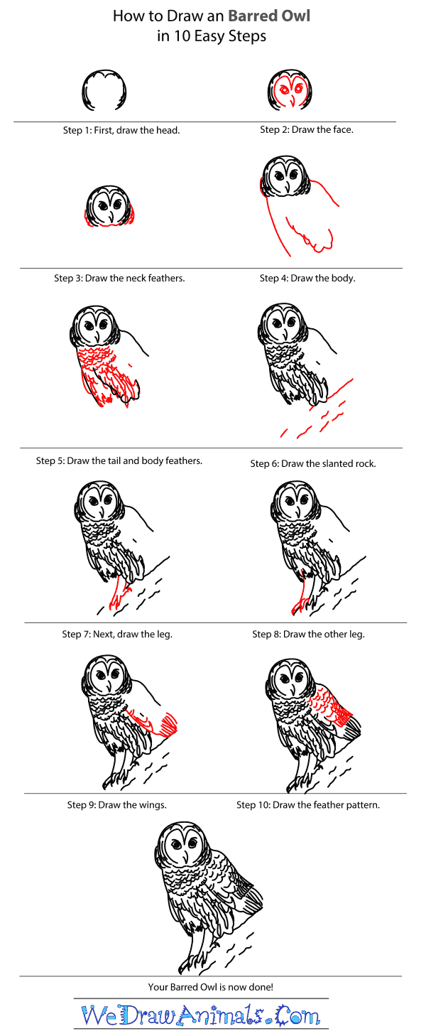 How to Draw a Barred Owl - Step-By-Step Tutorial