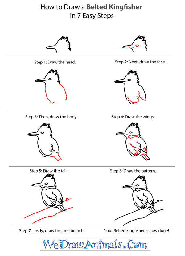 How to Draw a Belted Kingfisher - Step-by-Step Tutorial