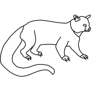 How To Draw a Binturong - Step-By-Step Tutorial