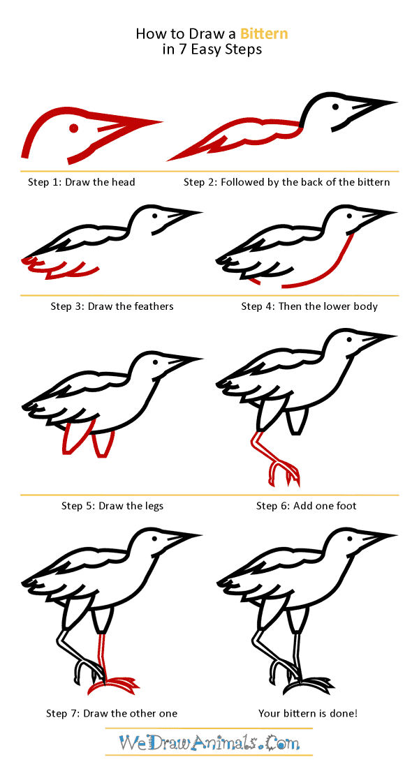 How to Draw a Bittern - Step-by-Step Tutorial