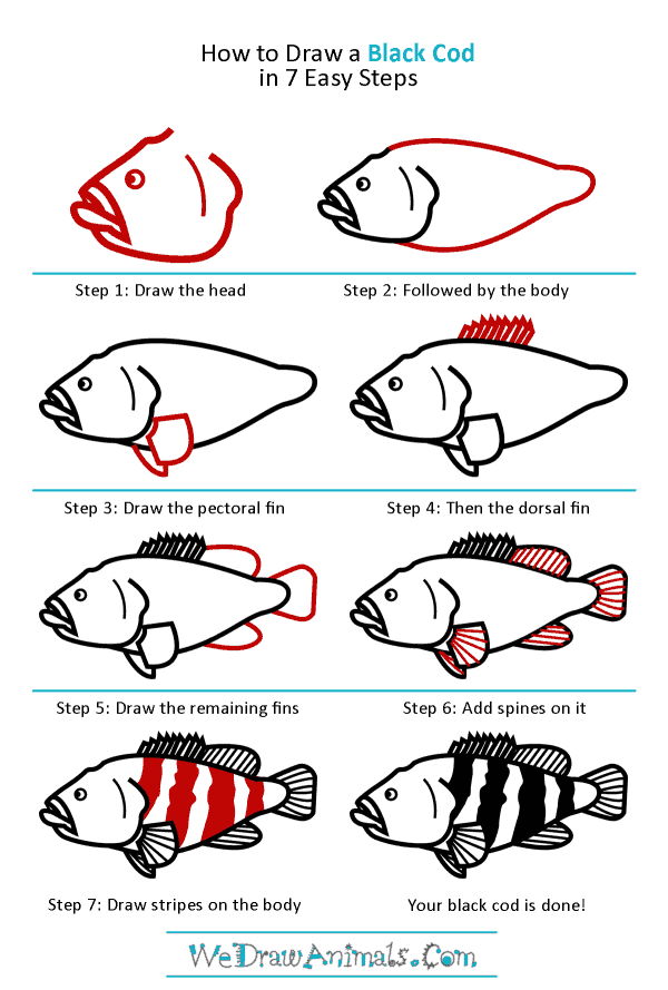 How to Draw a Black Cod - Step-by-Step Tutorial