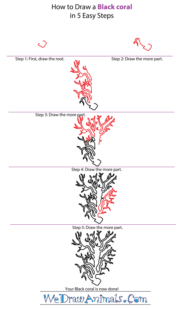 How to Draw a Black Coral - Step-by-Step Tutorial