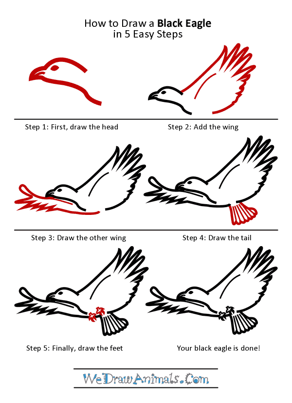 How to Draw a Black Eagle - Step-by-Step Tutorial