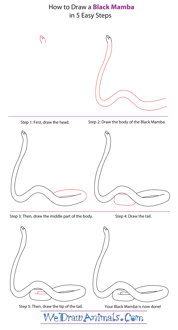 How to Draw a Black Mamba - Step-By-Step Tutorial