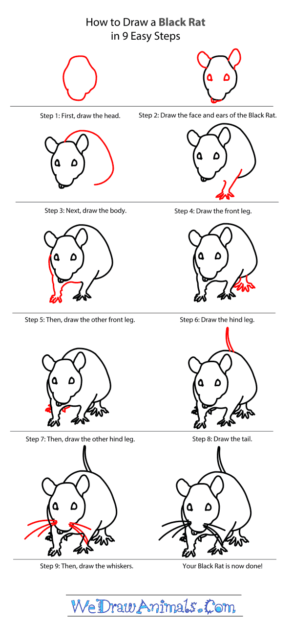 How to Draw a Black Rat - Step-by-Step Tutorial