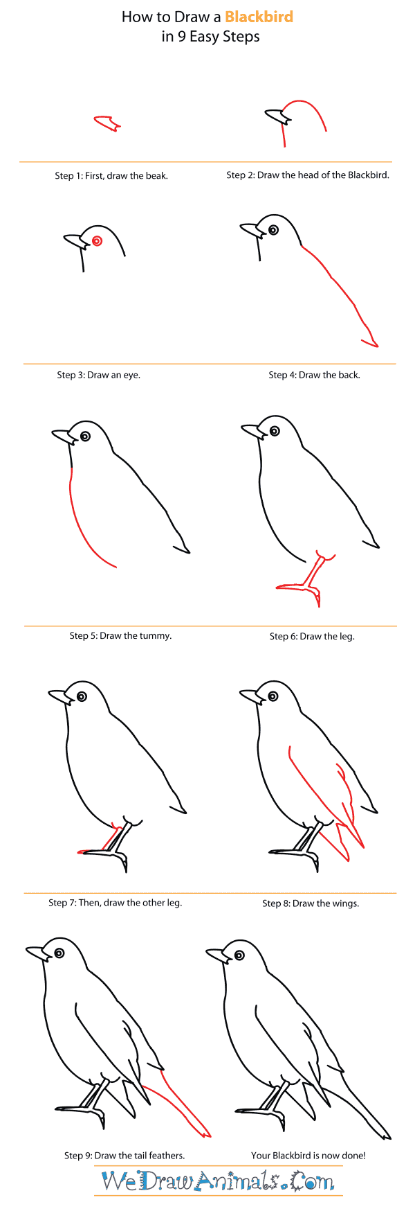 How to Draw a Blackbird - Step-By-Step Tutorial