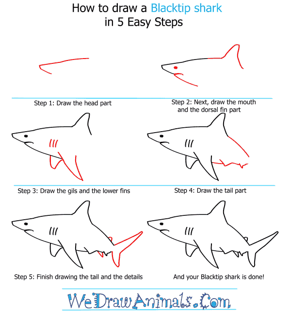 How to Draw a Blacktip Shark - Step-by-Step Tutorial