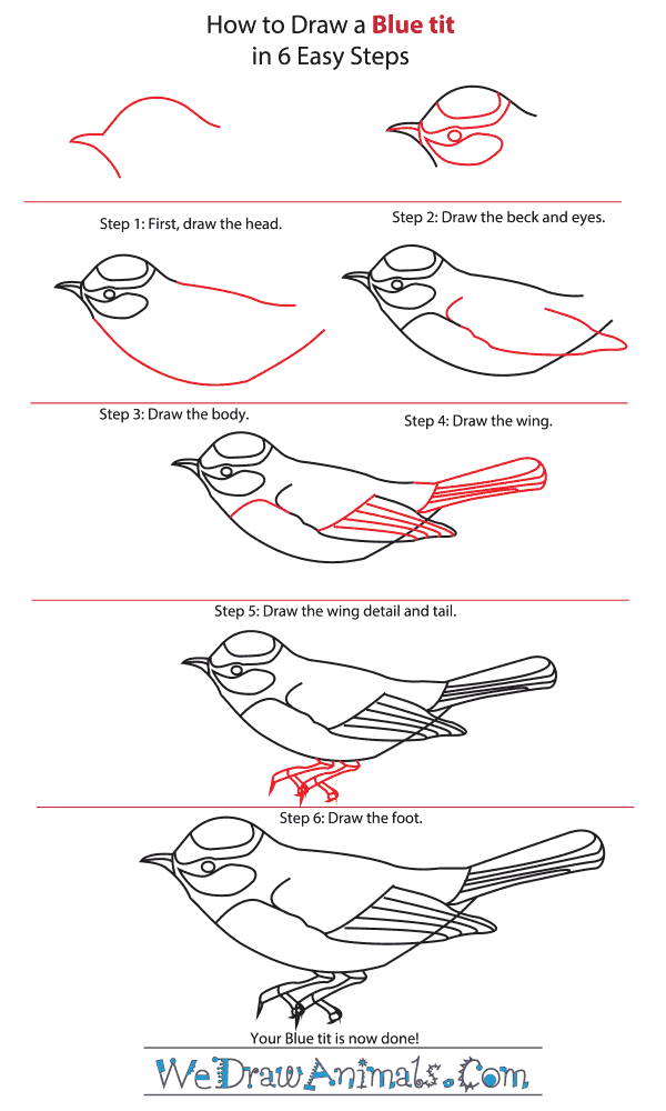 How to Draw a Blue Tit - Step-By-Step Tutorial