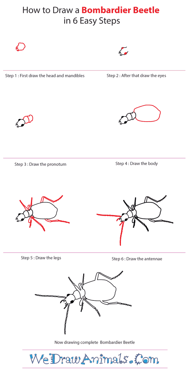 How to Draw a Bombardier Beetle - Step-by-Step Tutorial