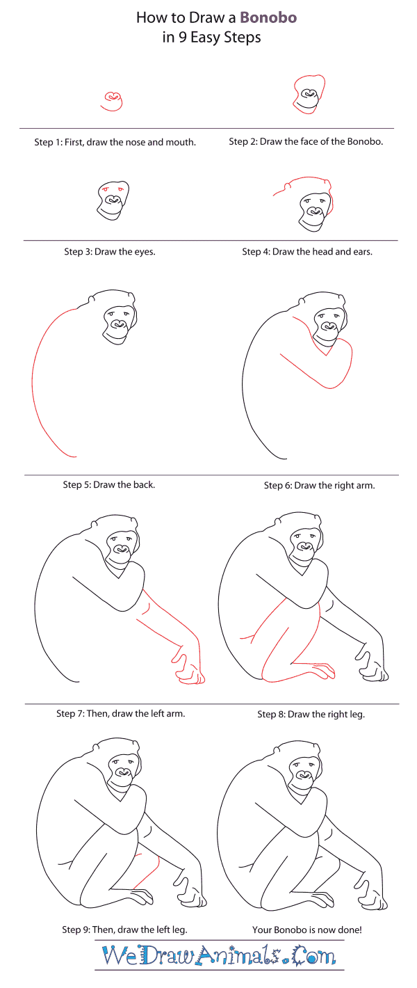 How to Draw a Bonobo - Step-By-Step Tutorial