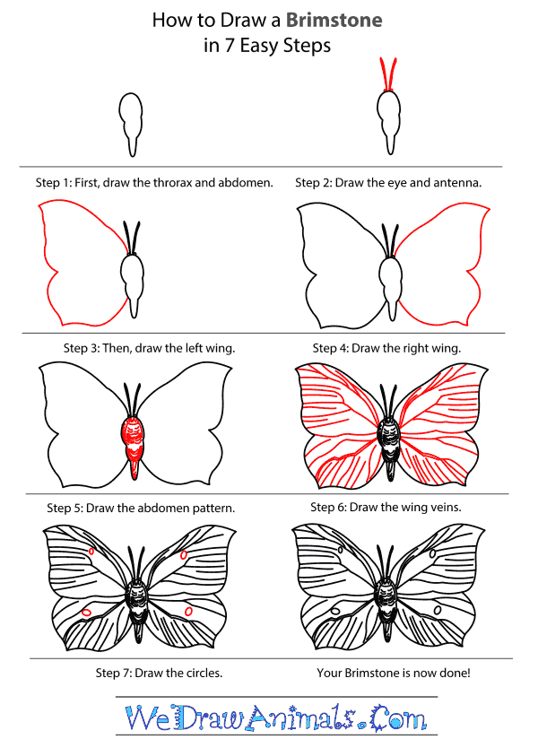 How to Draw a Brimstone - Step-By-Step Tutorial