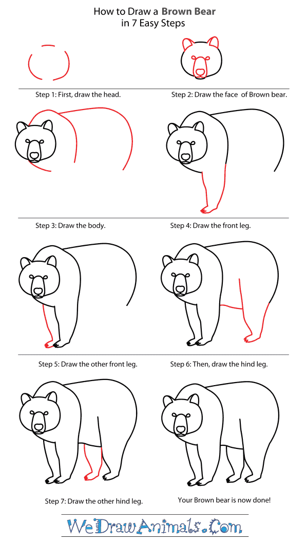 How to Draw a Brown Bear - Step-By-Step Tutorial