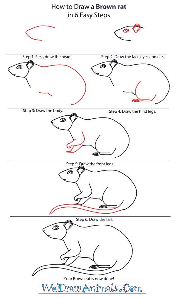 How to Draw a Brown Rat - Step-by-Step Tutorial