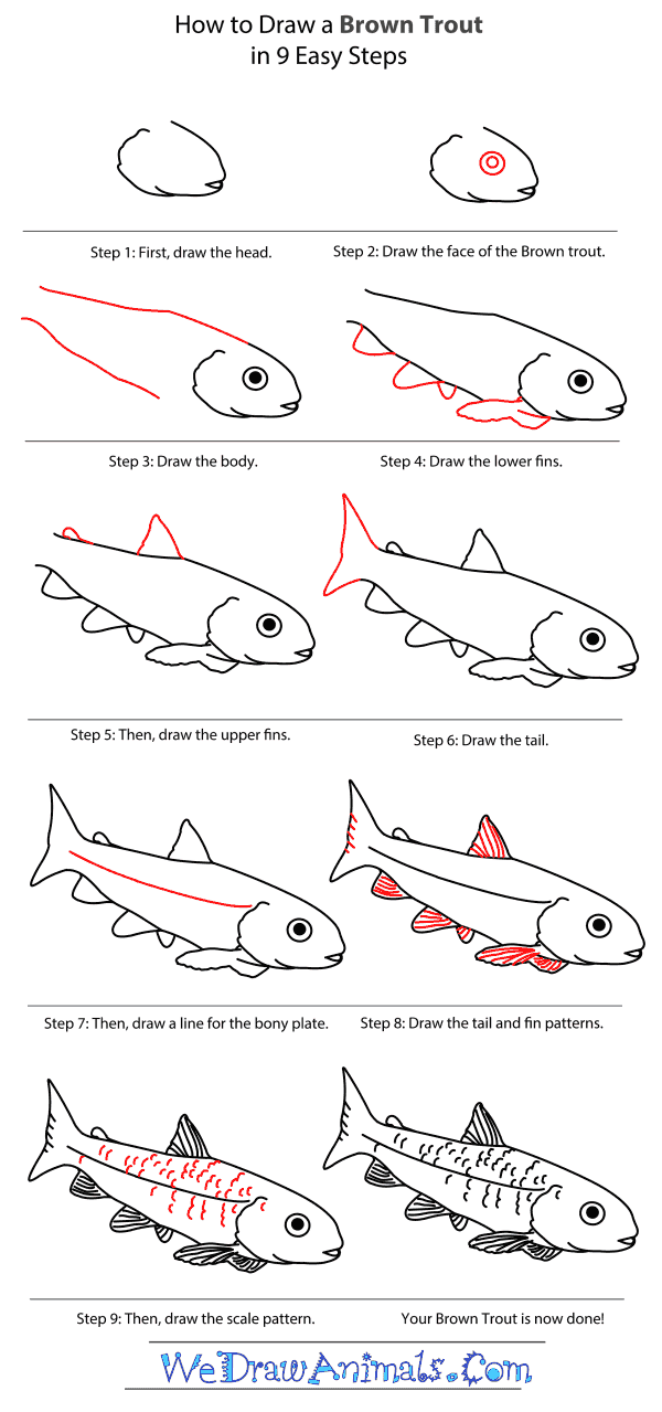 How to Draw a Brown Trout - Step-By-Step Tutorial