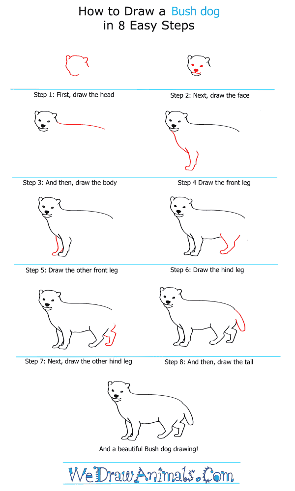 How to Draw a Bush Dog - Step-by-Step Tutorial