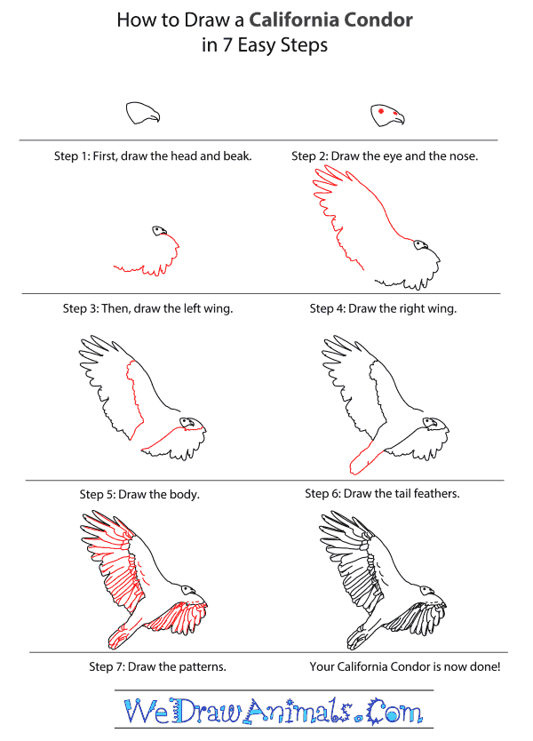 How to Draw a California Condor - Step-By-Step Tutorial