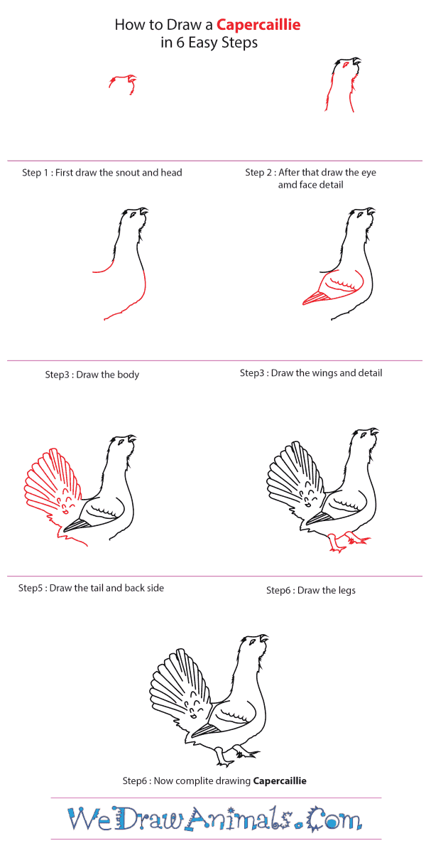How to Draw a Capercaillie - Step-by-Step Tutorial