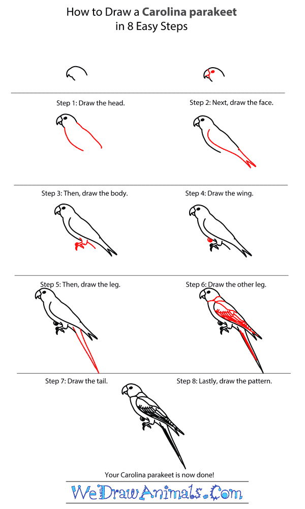 How to Draw a Carolina Parakeet - Step-by-Step Tutorial